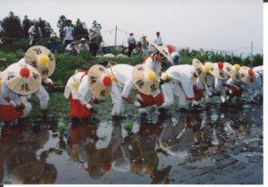 御田植祭の写真